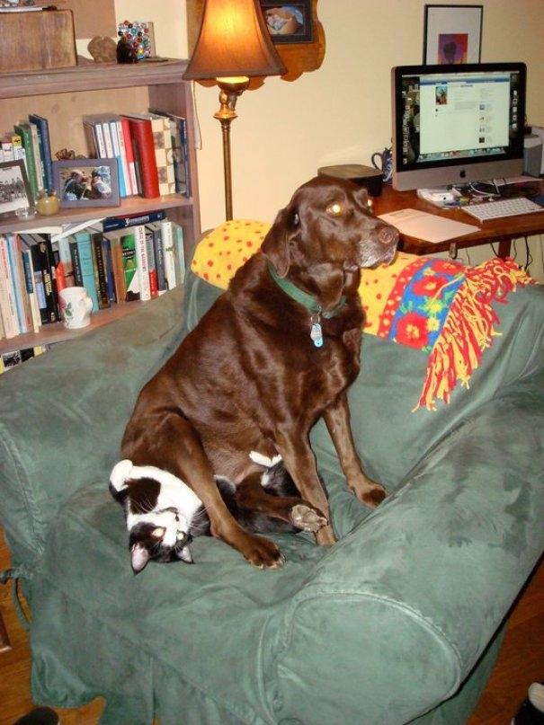 Прикольные картинки с котом и собакой