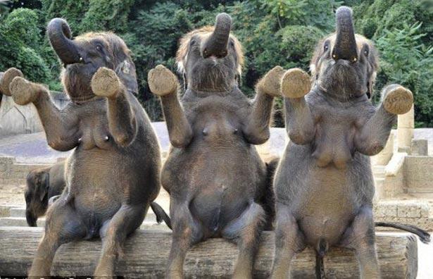 День слона (ФОТО) - фото 2