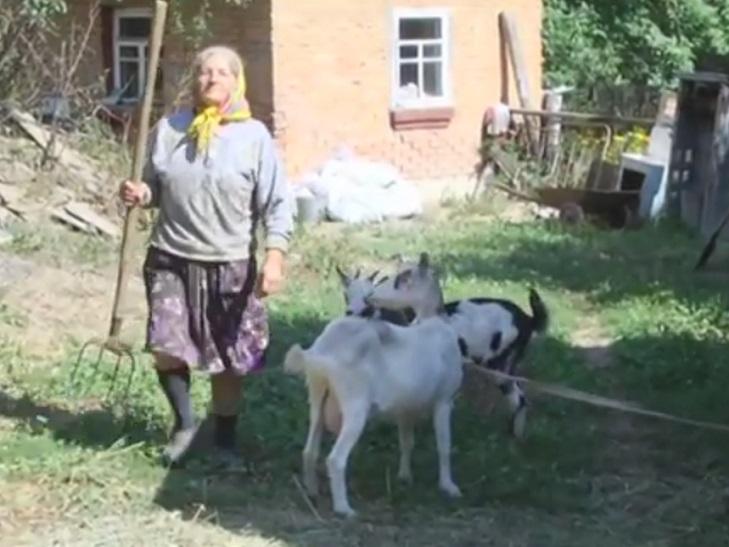 На Ярмолинеччині влаштовують термінове полювання на вовків - фото 1