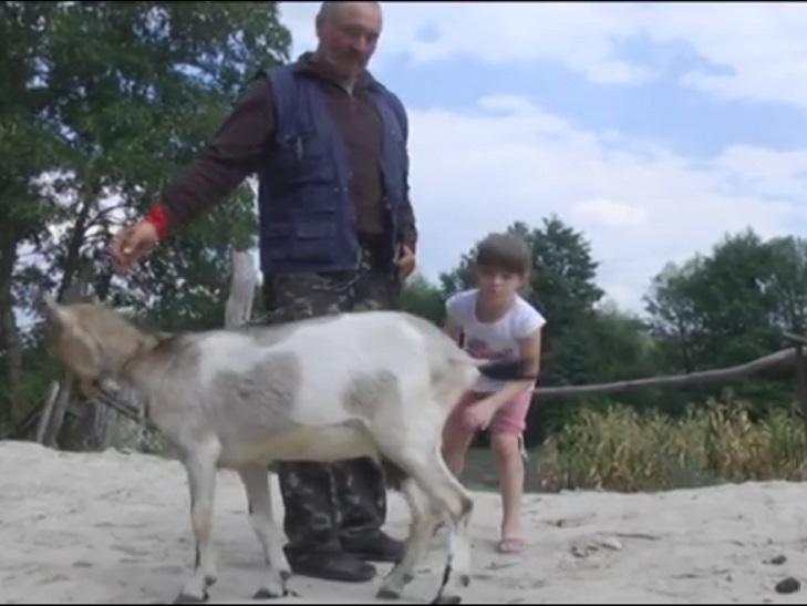 На Ярмолинеччині влаштовують термінове полювання на вовків - фото 2