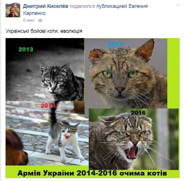 Як еволюціонували українські військові коти (ФОТОЖАБА) - фото 1