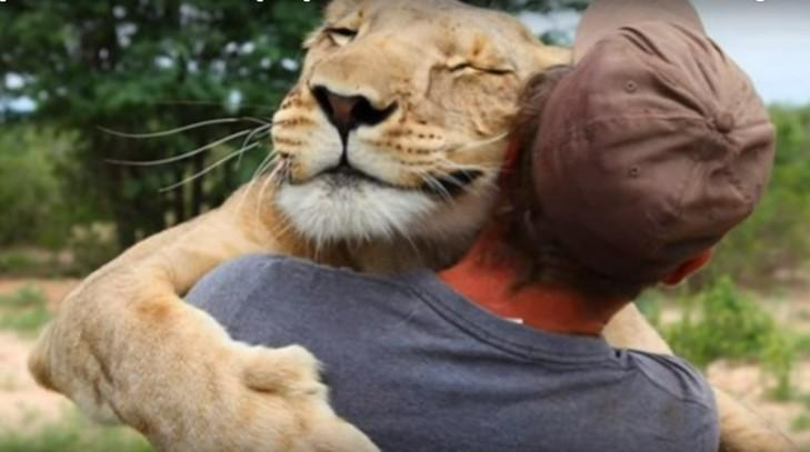 Кілька причин, чому ми завжди любитимемо котиків - фото 4