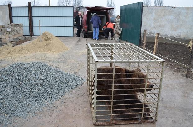 """Бурий ведмідь Балу сьогодні, 24 лютого, відправився з Запоріжжя на Закарпаття – в центр реабілітації ведмедів """"Синевір""""   - фото 8"""