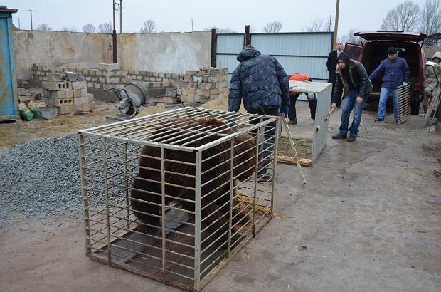 """Бурий ведмідь Балу сьогодні, 24 лютого, відправився з Запоріжжя на Закарпаття – в центр реабілітації ведмедів """"Синевір""""   - фото 17"""