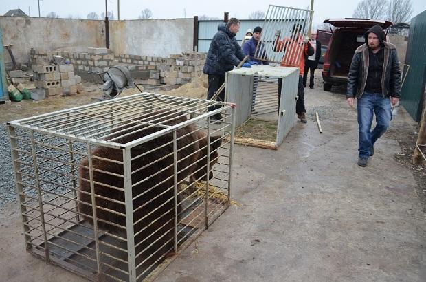 """Бурий ведмідь Балу сьогодні, 24 лютого, відправився з Запоріжжя на Закарпаття – в центр реабілітації ведмедів """"Синевір""""   - фото 18"""