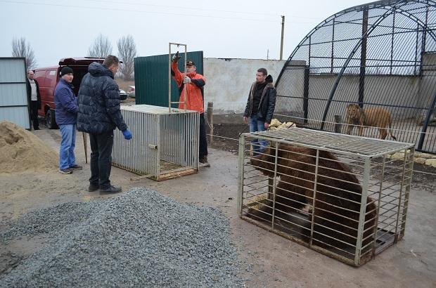 """Бурий ведмідь Балу сьогодні, 24 лютого, відправився з Запоріжжя на Закарпаття – в центр реабілітації ведмедів """"Синевір""""   - фото 19"""