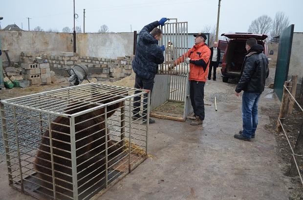 """Бурий ведмідь Балу сьогодні, 24 лютого, відправився з Запоріжжя на Закарпаття – в центр реабілітації ведмедів """"Синевір""""   - фото 20"""