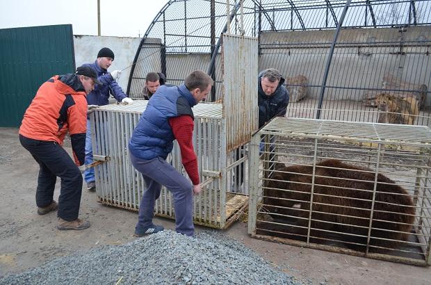 """Бурий ведмідь Балу сьогодні, 24 лютого, відправився з Запоріжжя на Закарпаття – в центр реабілітації ведмедів """"Синевір""""   - фото 22"""