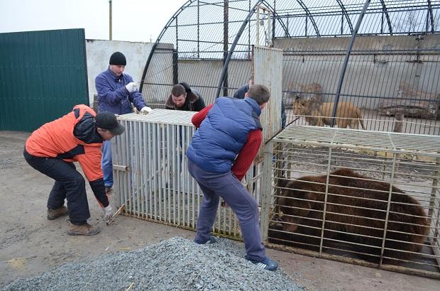 """Бурий ведмідь Балу сьогодні, 24 лютого, відправився з Запоріжжя на Закарпаття – в центр реабілітації ведмедів """"Синевір""""   - фото 23"""