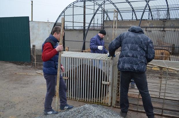 """Бурий ведмідь Балу сьогодні, 24 лютого, відправився з Запоріжжя на Закарпаття – в центр реабілітації ведмедів """"Синевір""""   - фото 24"""
