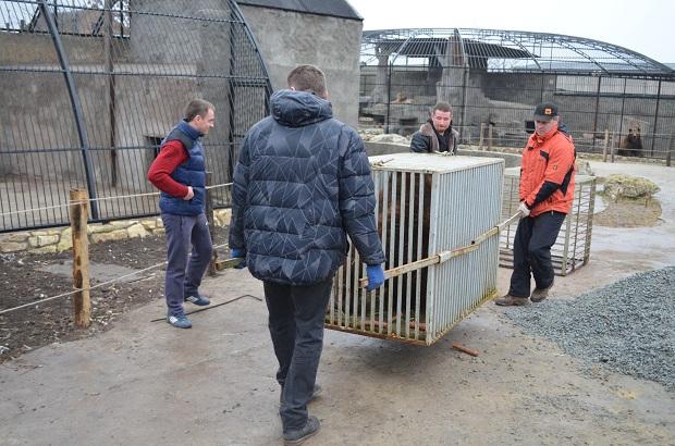 """Бурий ведмідь Балу сьогодні, 24 лютого, відправився з Запоріжжя на Закарпаття – в центр реабілітації ведмедів """"Синевір""""   - фото 25"""
