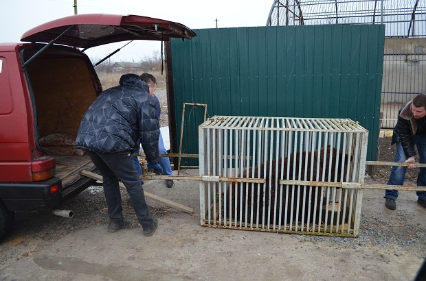 """Бурий ведмідь Балу сьогодні, 24 лютого, відправився з Запоріжжя на Закарпаття – в центр реабілітації ведмедів """"Синевір""""   - фото 26"""