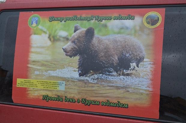 """Бурий ведмідь Балу сьогодні, 24 лютого, відправився з Запоріжжя на Закарпаття – в центр реабілітації ведмедів """"Синевір""""   - фото 30"""