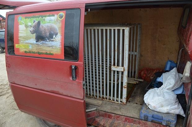 """Бурий ведмідь Балу сьогодні, 24 лютого, відправився з Запоріжжя на Закарпаття – в центр реабілітації ведмедів """"Синевір""""   - фото 29"""