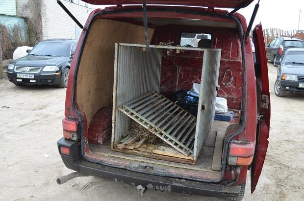 """Бурий ведмідь Балу сьогодні, 24 лютого, відправився з Запоріжжя на Закарпаття – в центр реабілітації ведмедів """"Синевір""""   - фото 15"""
