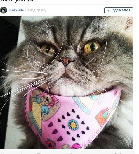 10 котів в яких є причини не любити