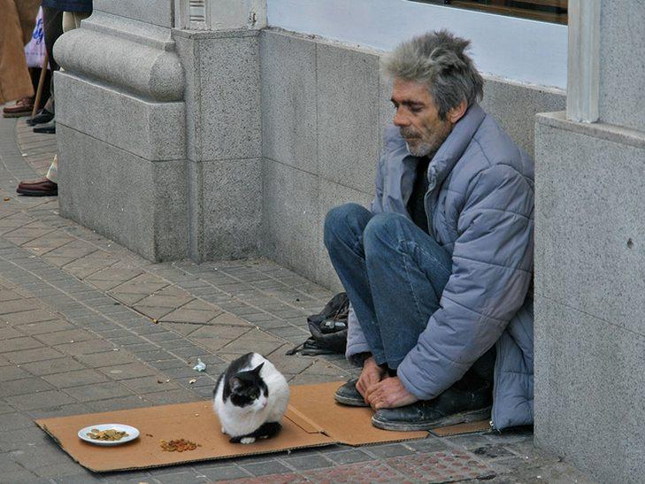 Кілька причин, чому ми завжди любитимемо котиків - фото 7