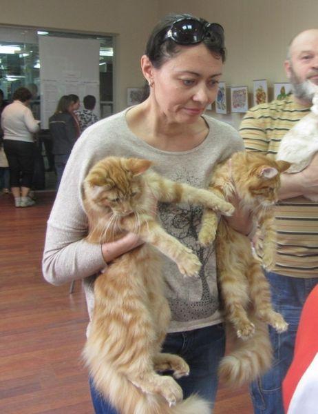 У Вінниці триває міжнародна виставка котів  - фото 4