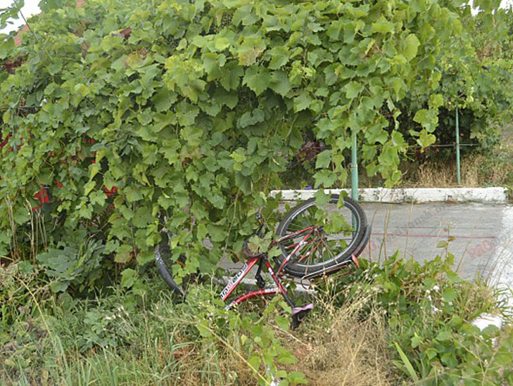 У Бердянську велосипедист потрапив під колеса авто - фото 1
