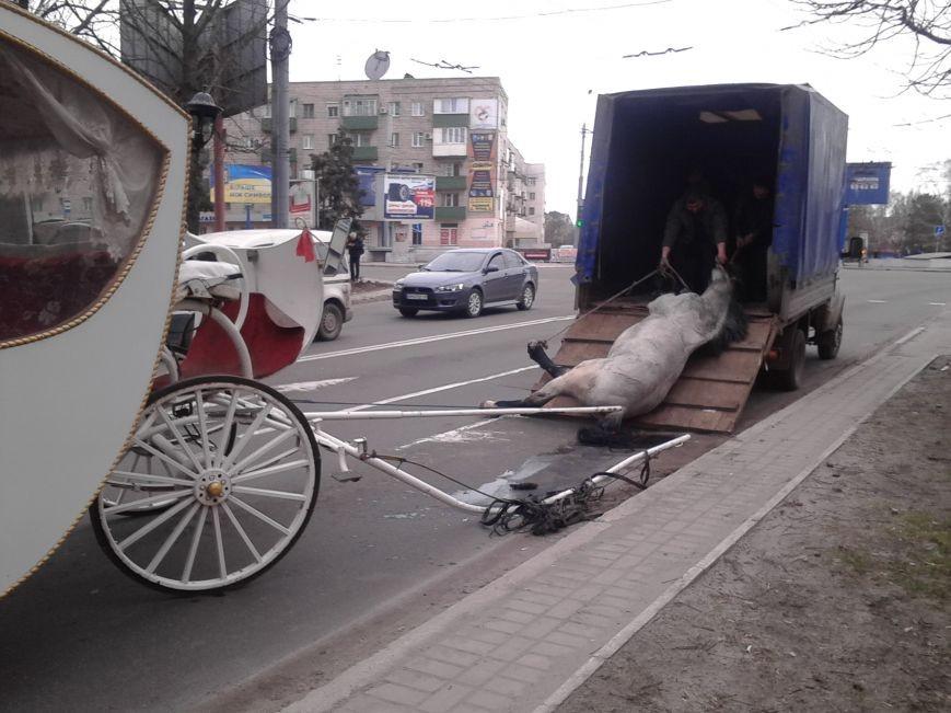 У центрі Маріуполя помер кінь, який віз молодят (ФОТО) - фото 2