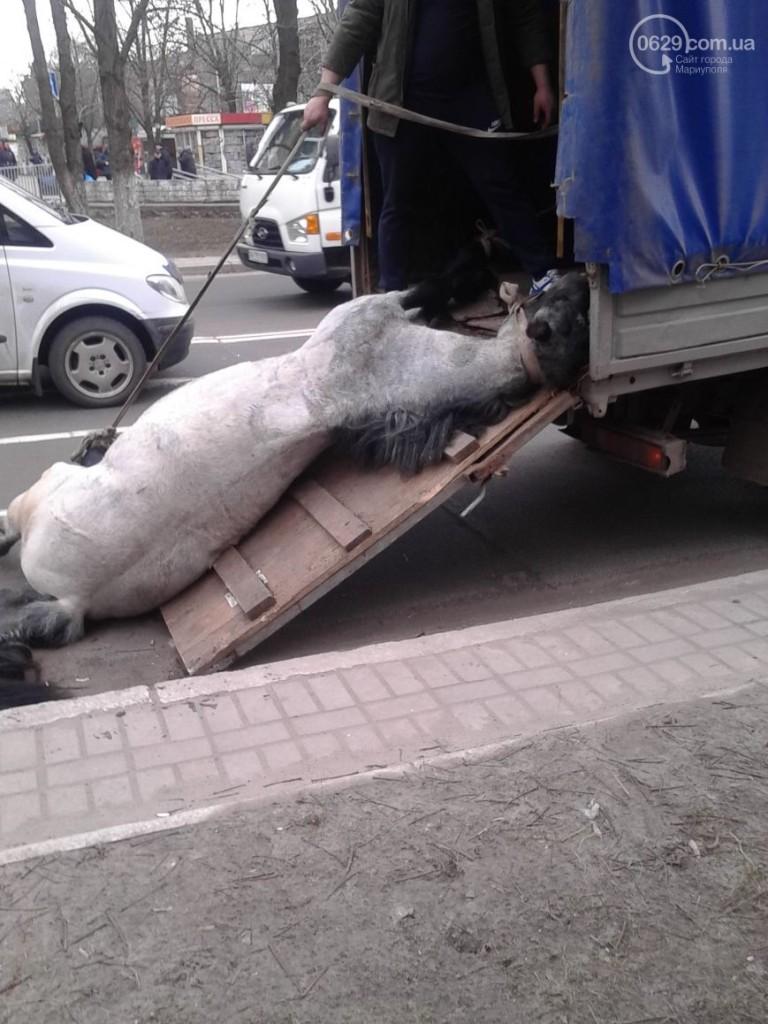 У центрі Маріуполя помер кінь, який віз молодят (ФОТО) - фото 5