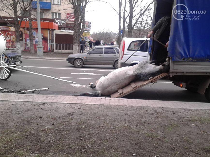 У центрі Маріуполя помер кінь, який віз молодят (ФОТО) - фото 6