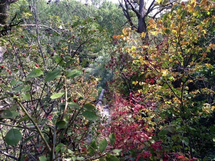 Найдивовижніший водоспад Хмельниччини залишається поза увагою туристів - фото 6