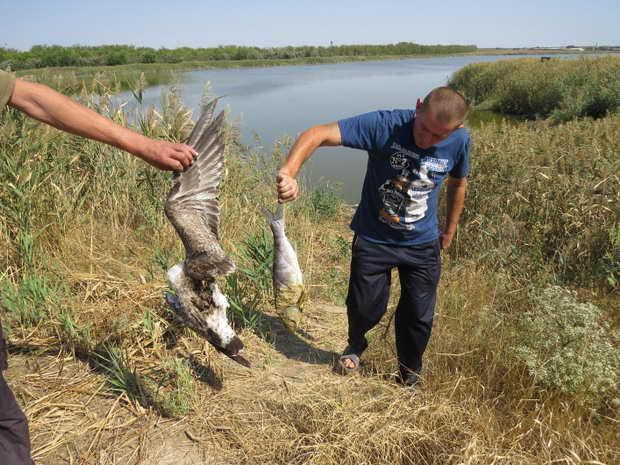 У ставку на Мелітопольщині з невідомих причин розпочався масовий мор риби, проте рибалок це не зупиняє - фото 2