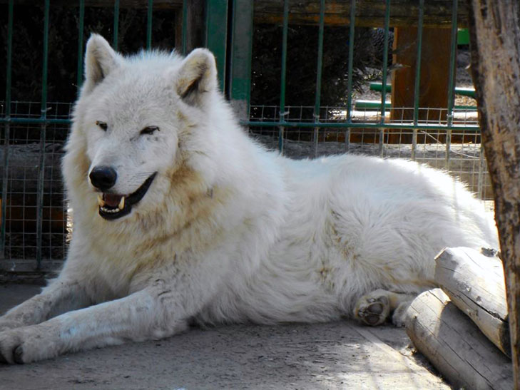 У бердянському зоопарку народилися вовченята і поні  - фото 1