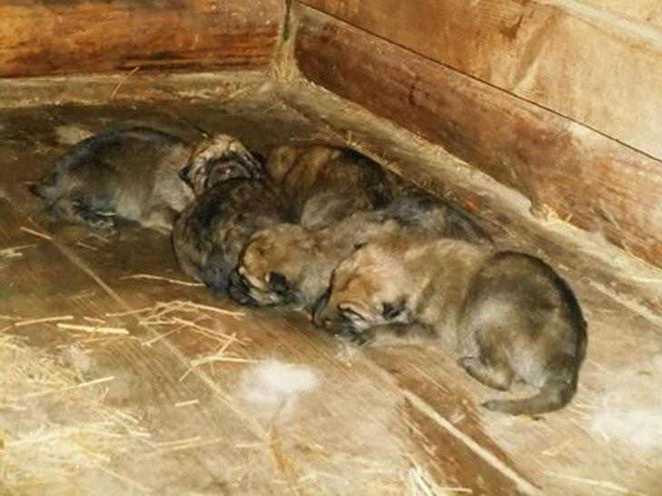 У бердянському зоопарку народилися вовченята і поні  - фото 2