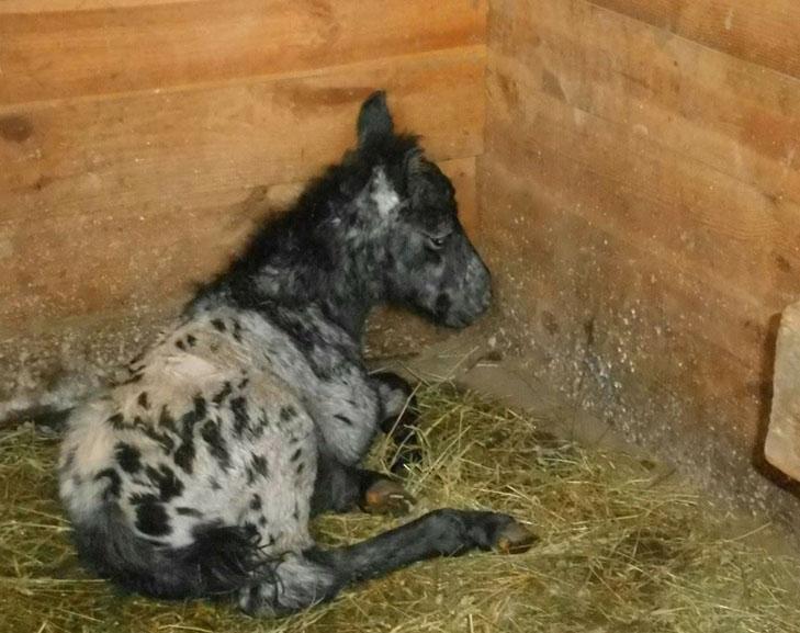 У бердянському зоопарку народилися вовченята і поні  - фото 4