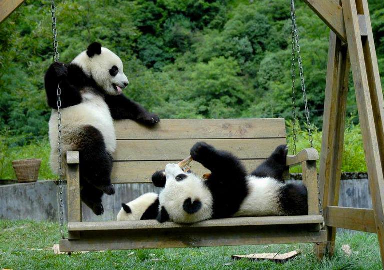 Як виглядає дитсадок для панд у Китаї (ФОТО) - фото 6
