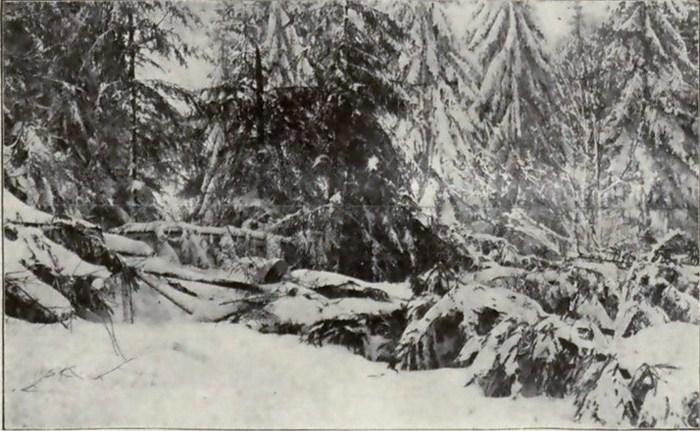 Що витворяли львів'яни зі снігом сто років тому - фото 5