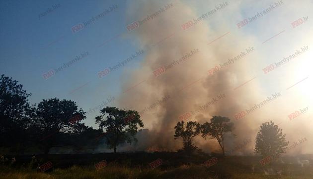 У Бердянську біля старого кладовища виникла масштабна пожежа - фото 4