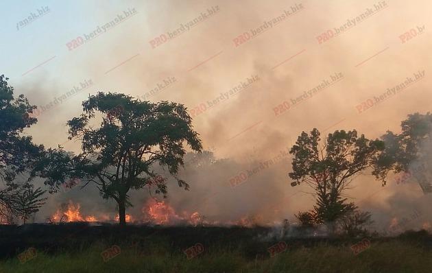 У Бердянську біля старого кладовища виникла масштабна пожежа - фото 5