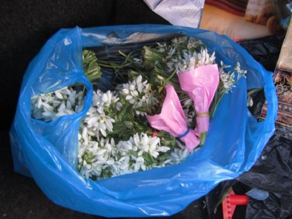 У Вінниці ловили торговців пролісками - фото 3