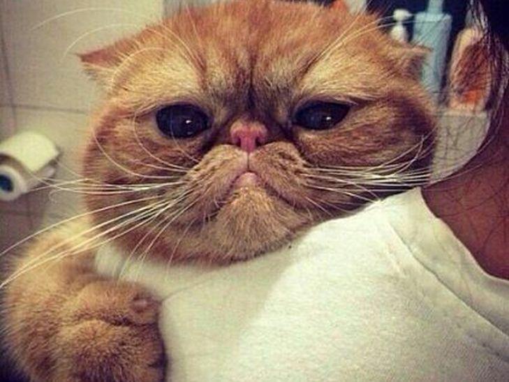 Кілька причин, чому ми завжди любитимемо котиків - фото 12