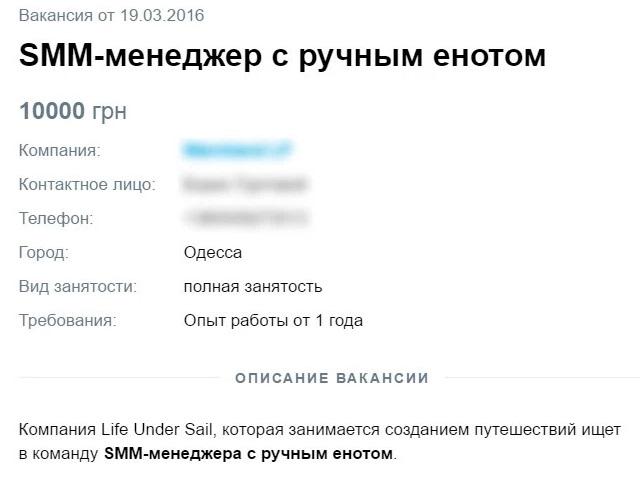 Вакансія для єнота: в Одесі розшукують SMM-менеджера з вихованцем  - фото 1