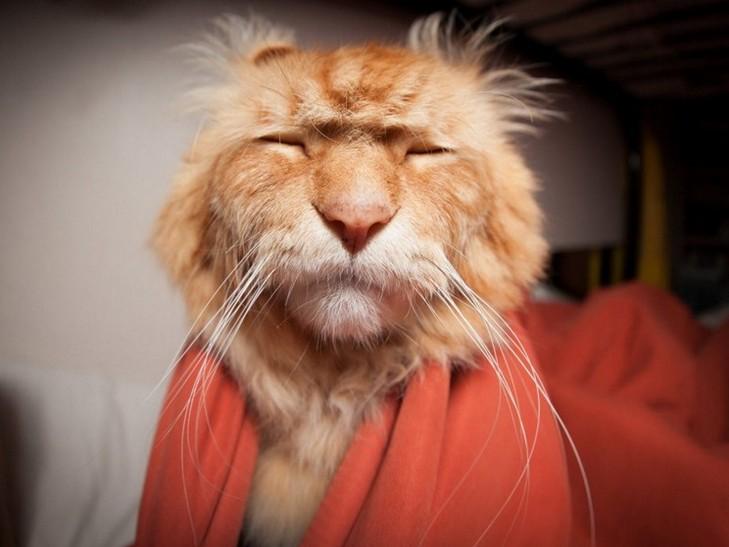 Кілька причин, чому ми завжди любитимемо котиків - фото 1