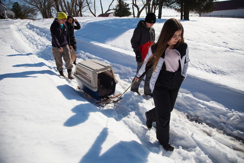 Як американці врятували життя поросяті, якого замело снігом  - фото 4