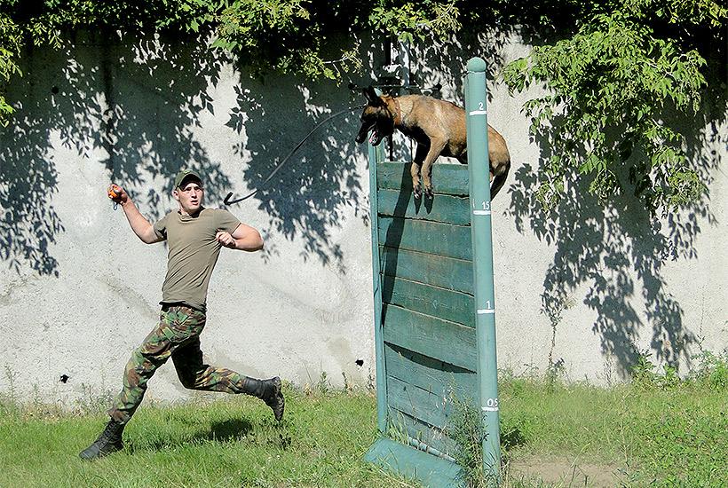 Харківські кінологи-гвардійці обійшли колег з поліції та прикордонної служби  - фото 6