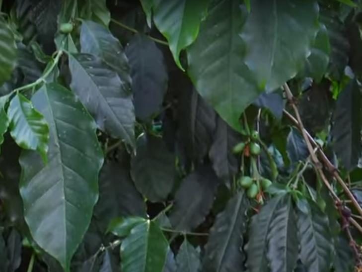 Хмельничанин вирощує 45 сортів цитрусових - фото 2
