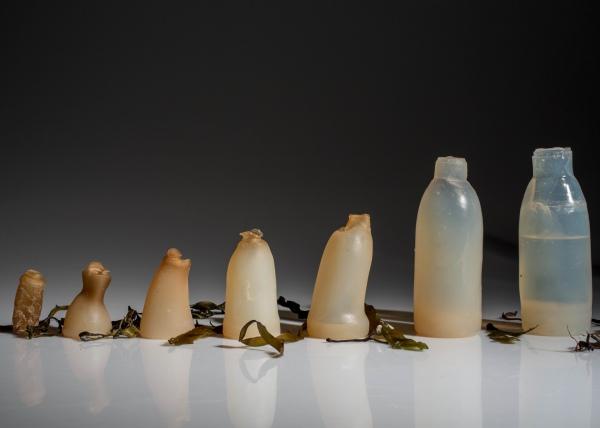 Студент винайшов пляшки з водоростей, які розкладаються - фото 1