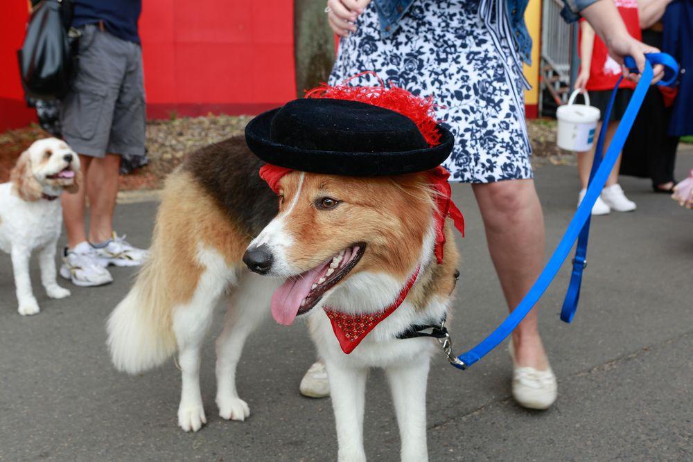 Як у Австралії собаки в костюмах до опери ходили - фото 5