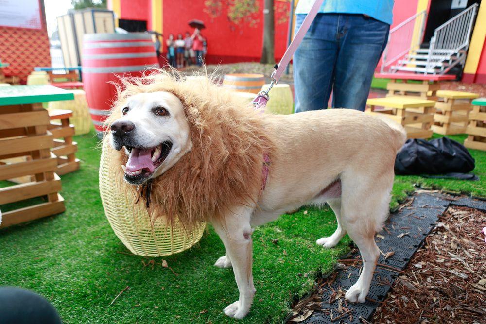 Як у Австралії собаки в костюмах до опери ходили - фото 4