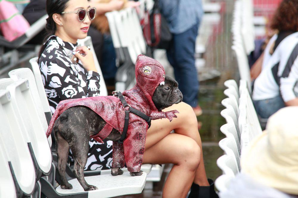 Як у Австралії собаки в костюмах до опери ходили - фото 3