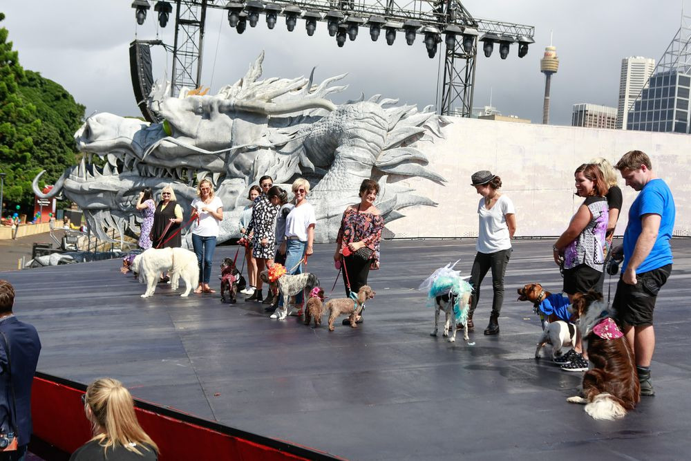 Як у Австралії собаки в костюмах до опери ходили - фото 2