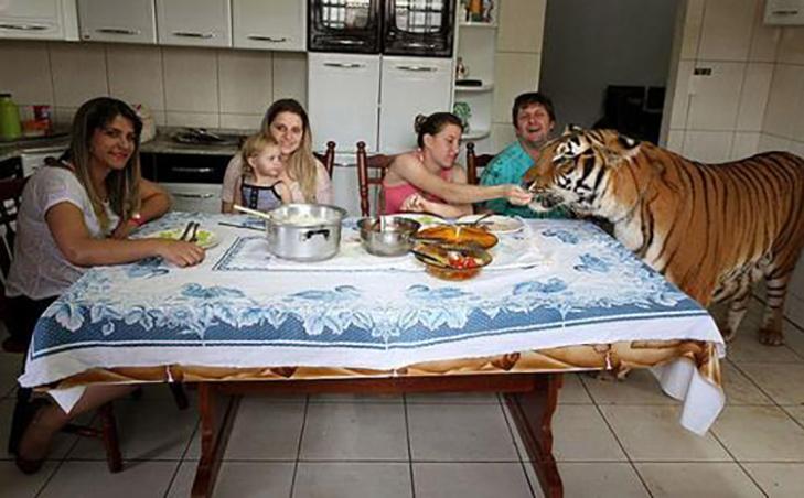 35 домашніх тварин, які вас здивують - фото 3