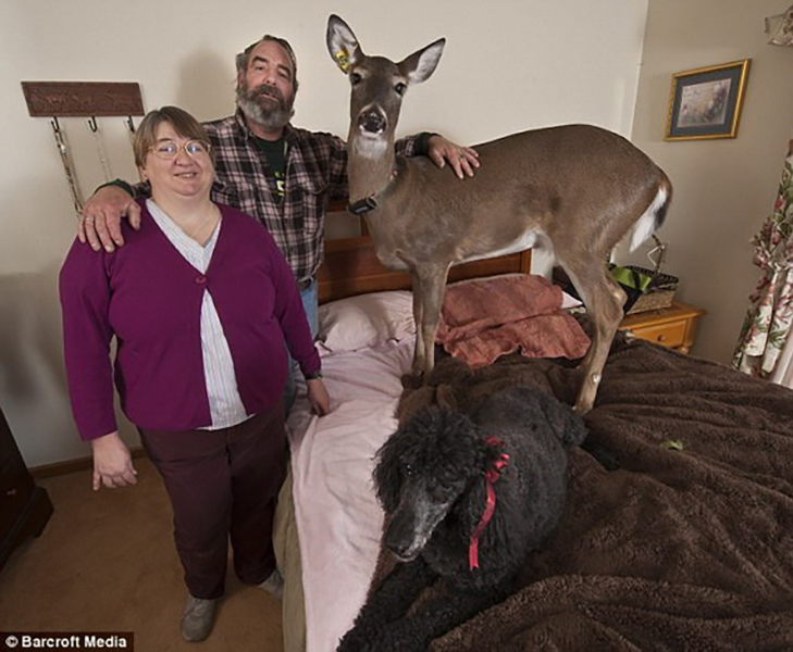 35 домашніх тварин, які вас здивують - фото 5