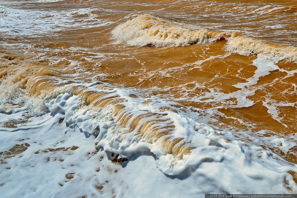 Як у Криму Чорне море стало жовтим - фото 2